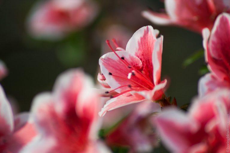 Une jolie fleur des serre d'Auteuil