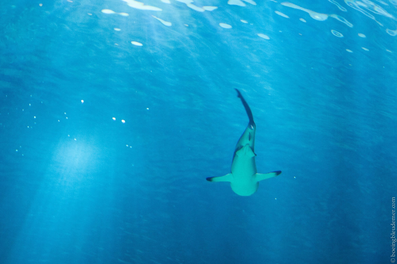 Aquarium de Paris: Requin solitaire