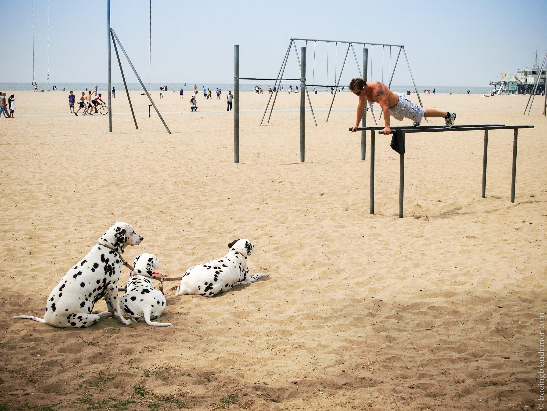 Trois dalmatiens sur la plage à Santa Monica