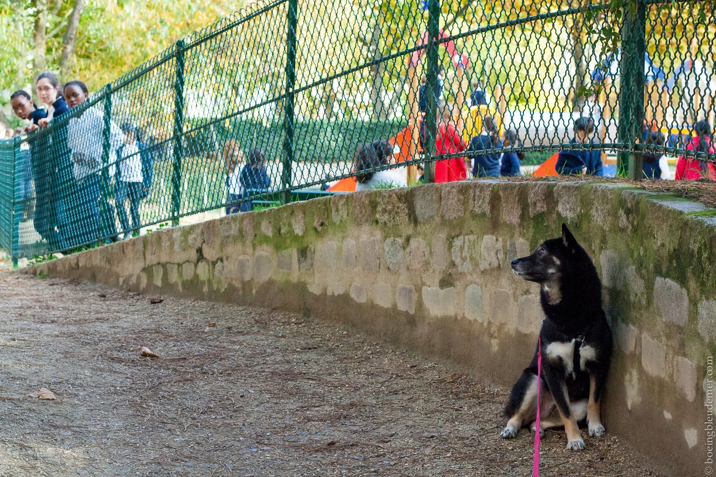 Balade dans l'allée des chiens du Parc George Brassens