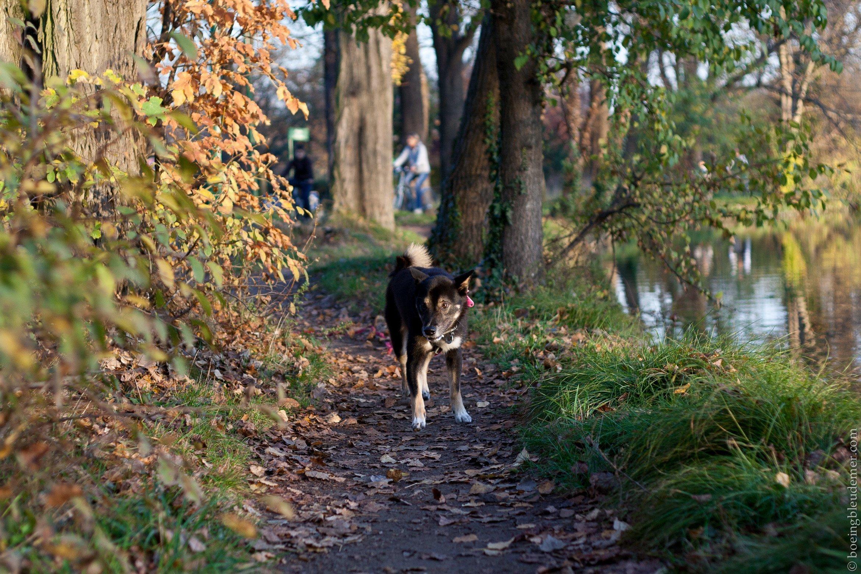 Balade avec chien au Parc de Vincennes