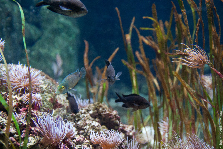visite nocturne de l aquarium de sur un boeing bleu de mer