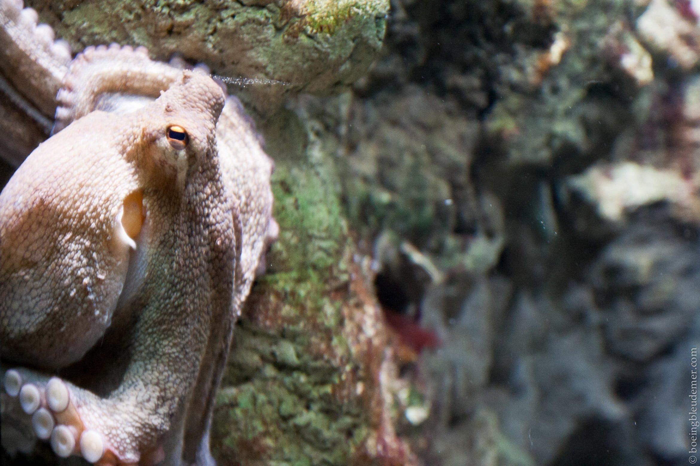 Aquarium-5019