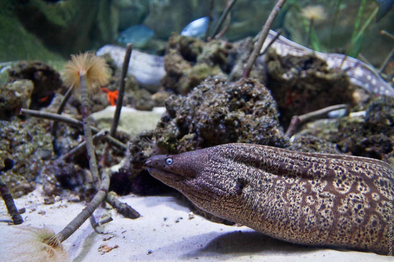 Aquarium-5028