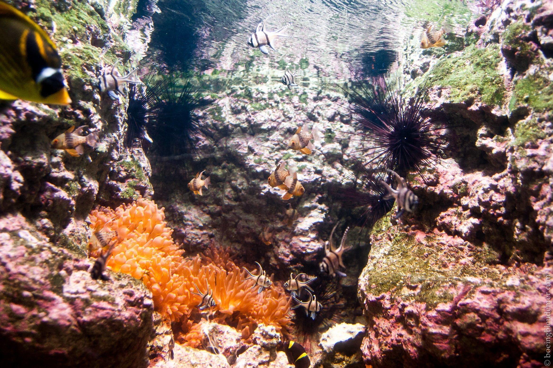 Aquarium-5085
