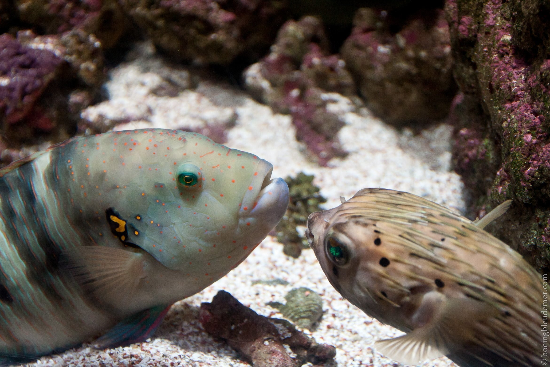 Aquarium-5111