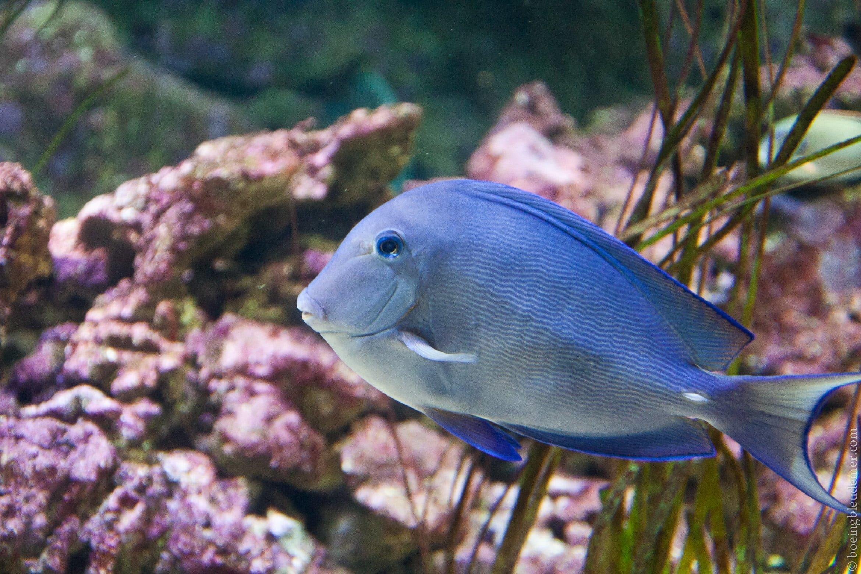 Aquarium-5129