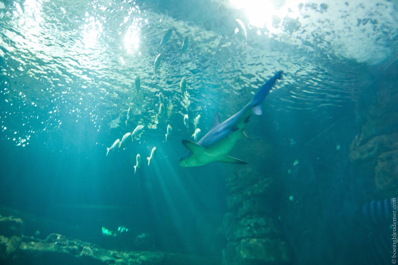 Aquarium-5163