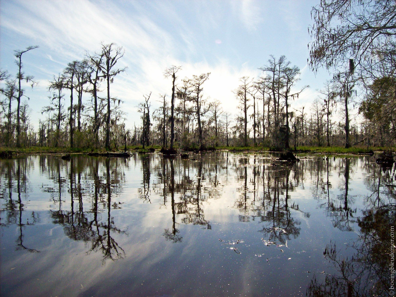 Louisiana-Bayou-307