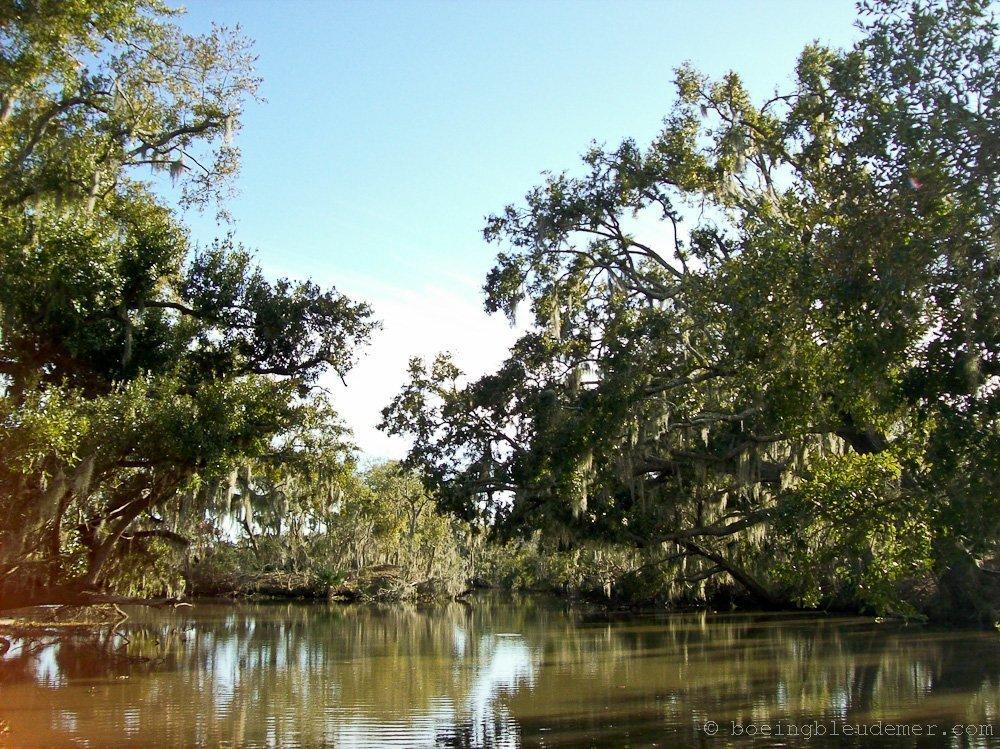 Louisiana-Bayou-322