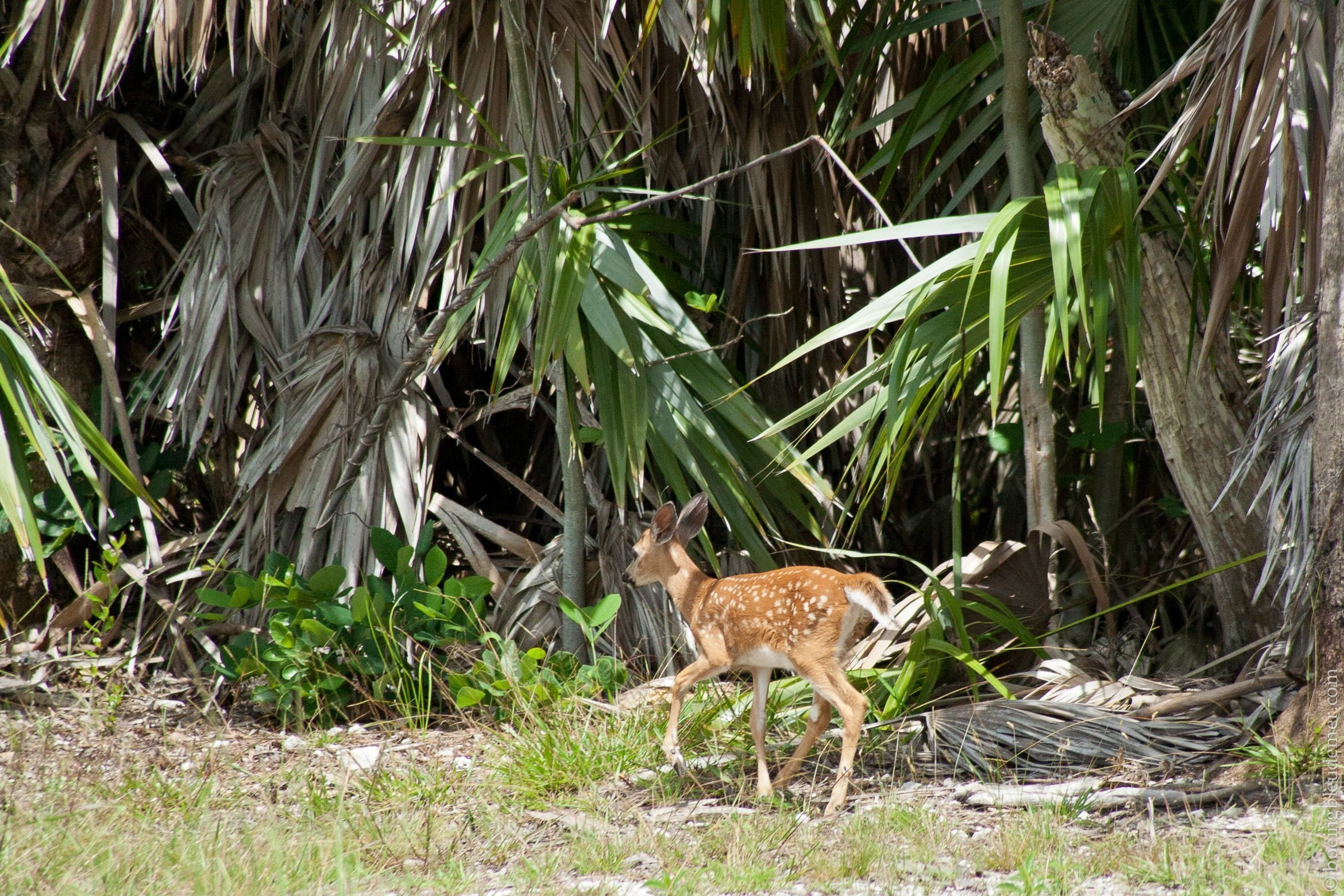 Animals in the Keys-6019
