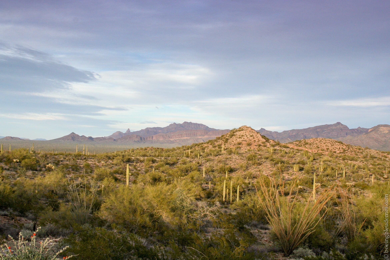 Organ Pipe Cactus National Monument, AZ dans le désert de Sonora