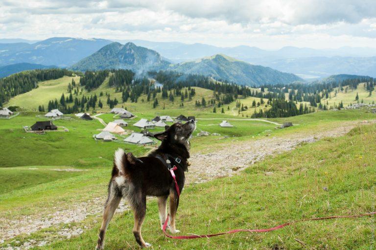 Akira à Velika Planina