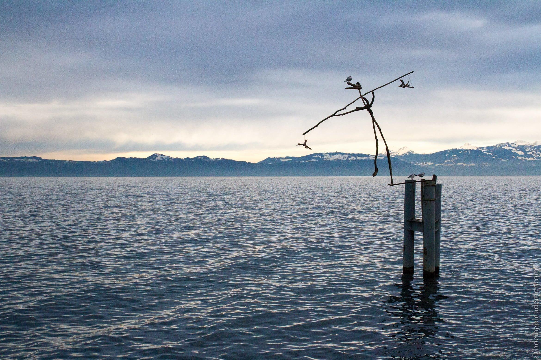 Flottin sur le lac Léman