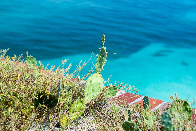 Végétation à Dry Tortugas