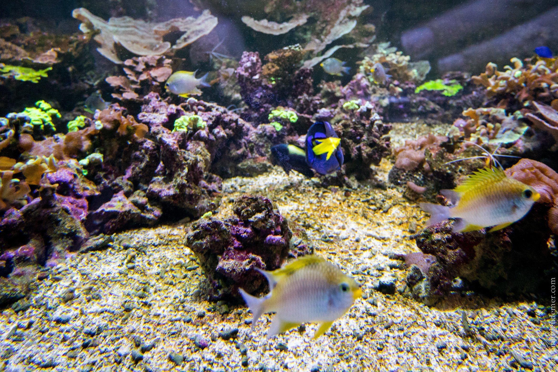 Aquarium Tropical de Paris: bassin
