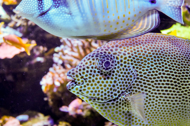 Aquarium Tropical de Paris: poisson à pois