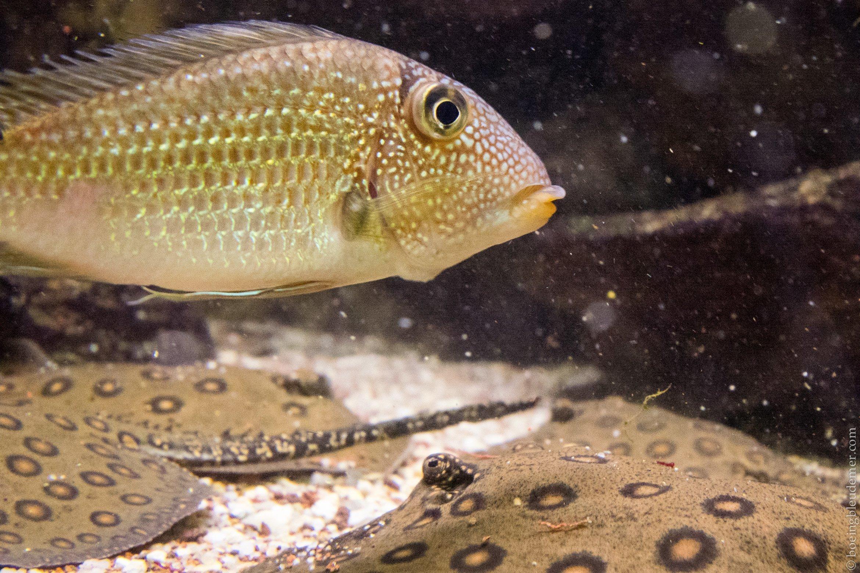 Aquarium Tropical de Paris: raies