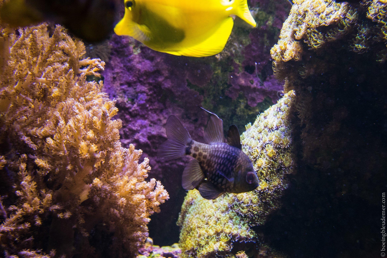Aquarium Tropical de Paris: poisson noir