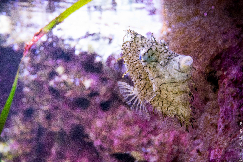 Aquarium Tropical de Paris: drôle de poisson