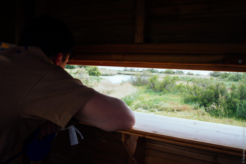Pays Catalan: observation de la faune des milieux humides.