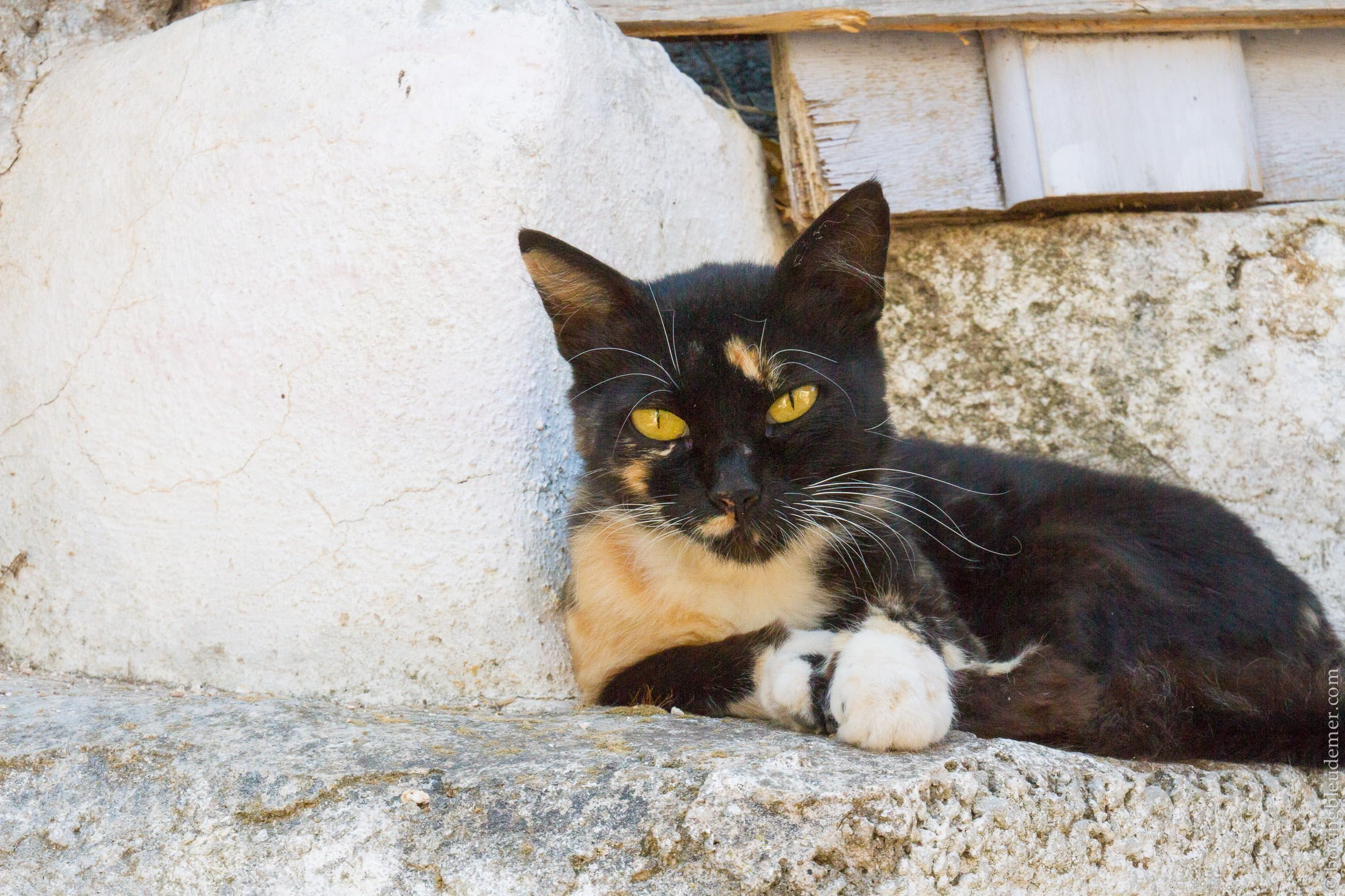 Pittoresque île d'Hydra: chat grec