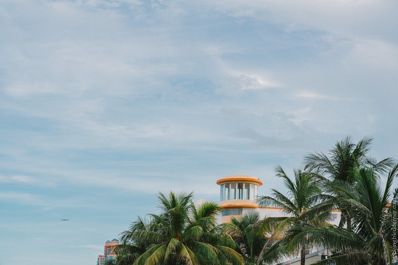 Palmiers de Floride