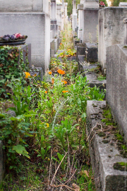 Tombes abandonnées Père Lachaise