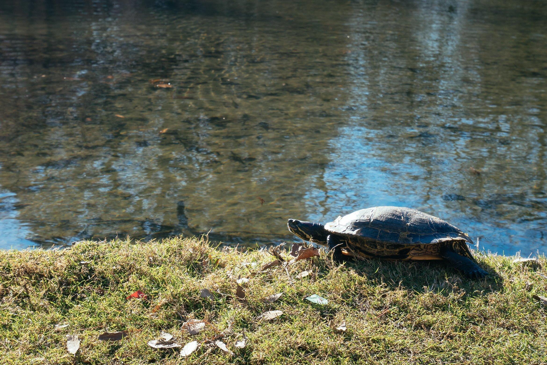 Week-end en amoureux à Milan: tortue au Parco Sempione