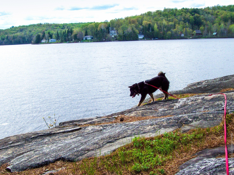 Akira au lac Berthier
