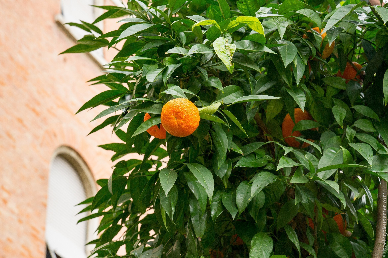 Un week-end à Pise: oranges