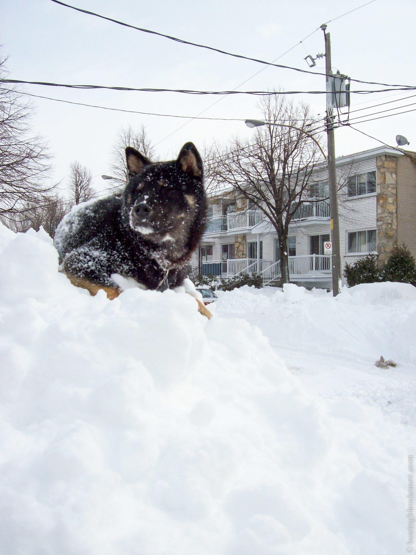 Nostalgie de l'hiver : Akira sur un banc de neige