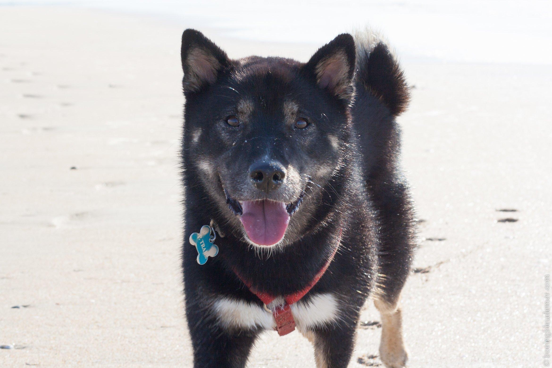 Un week-end en camping à Honfleur : mon chien sur la plage