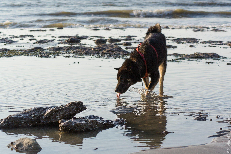 Un week-end ensoleillé à Villerville en Normandie: mon chien à la plage