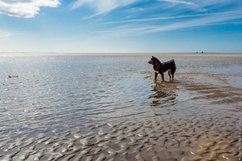Week-end de camping en Normandie : chien sur la plage