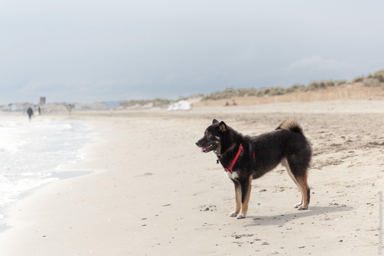 Akira en vacances à la Grande Motte