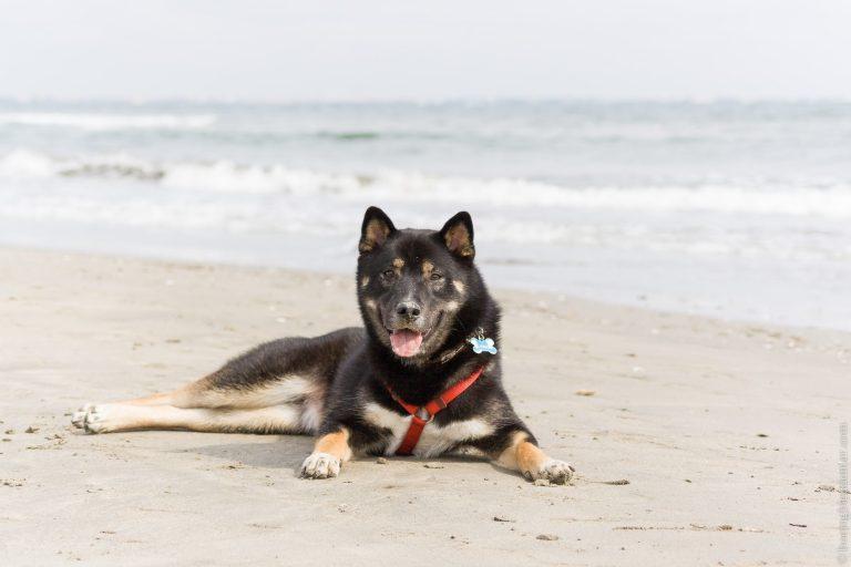 Akira sur la plage à la Grande Motte