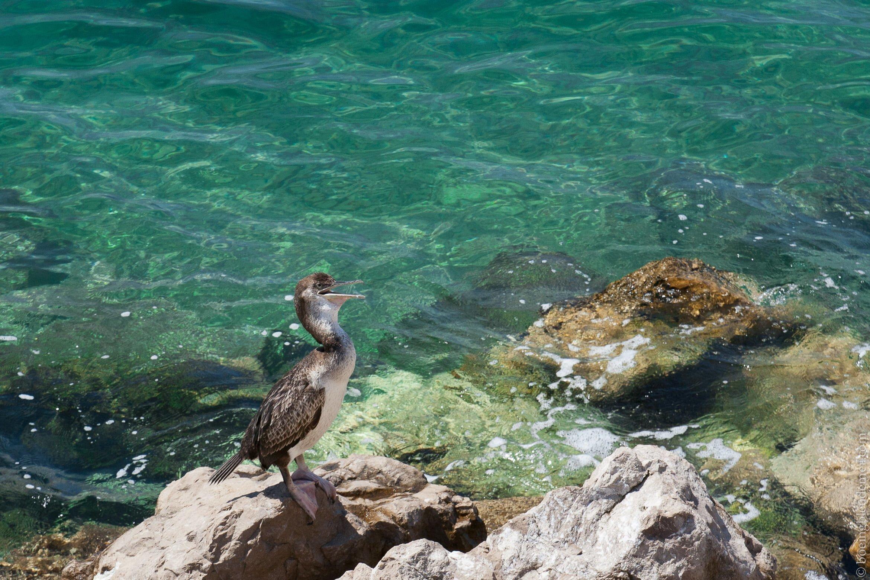 Oiseau-Mediterranee