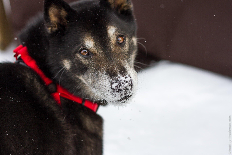 Akira dans la neige, 10 ans