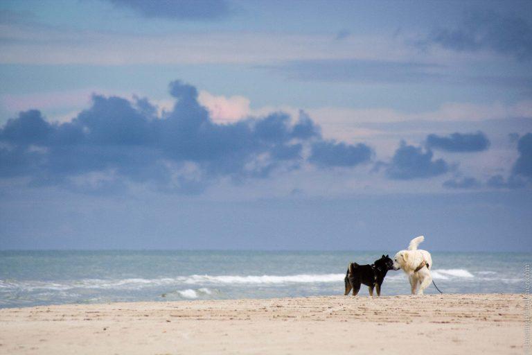 Akira sur une plage du Danemark