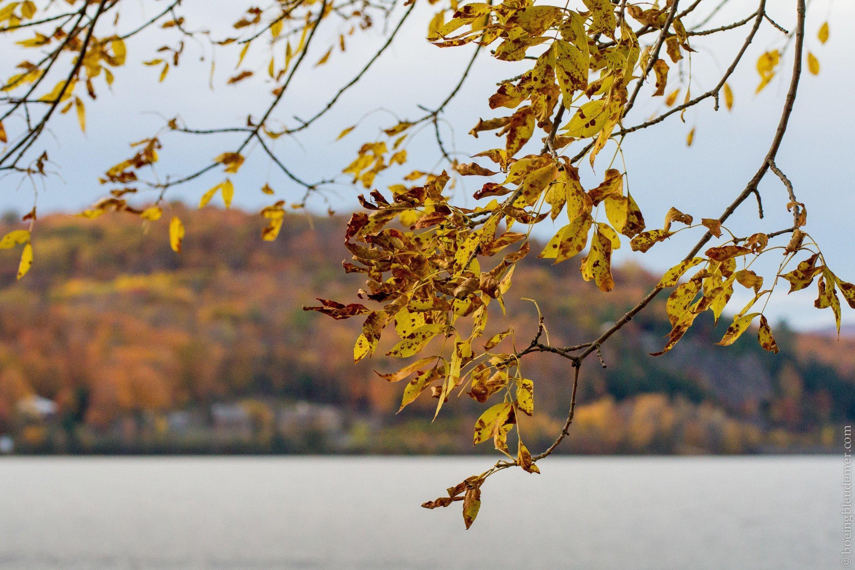 Feuilles devant le lac Maskinongé