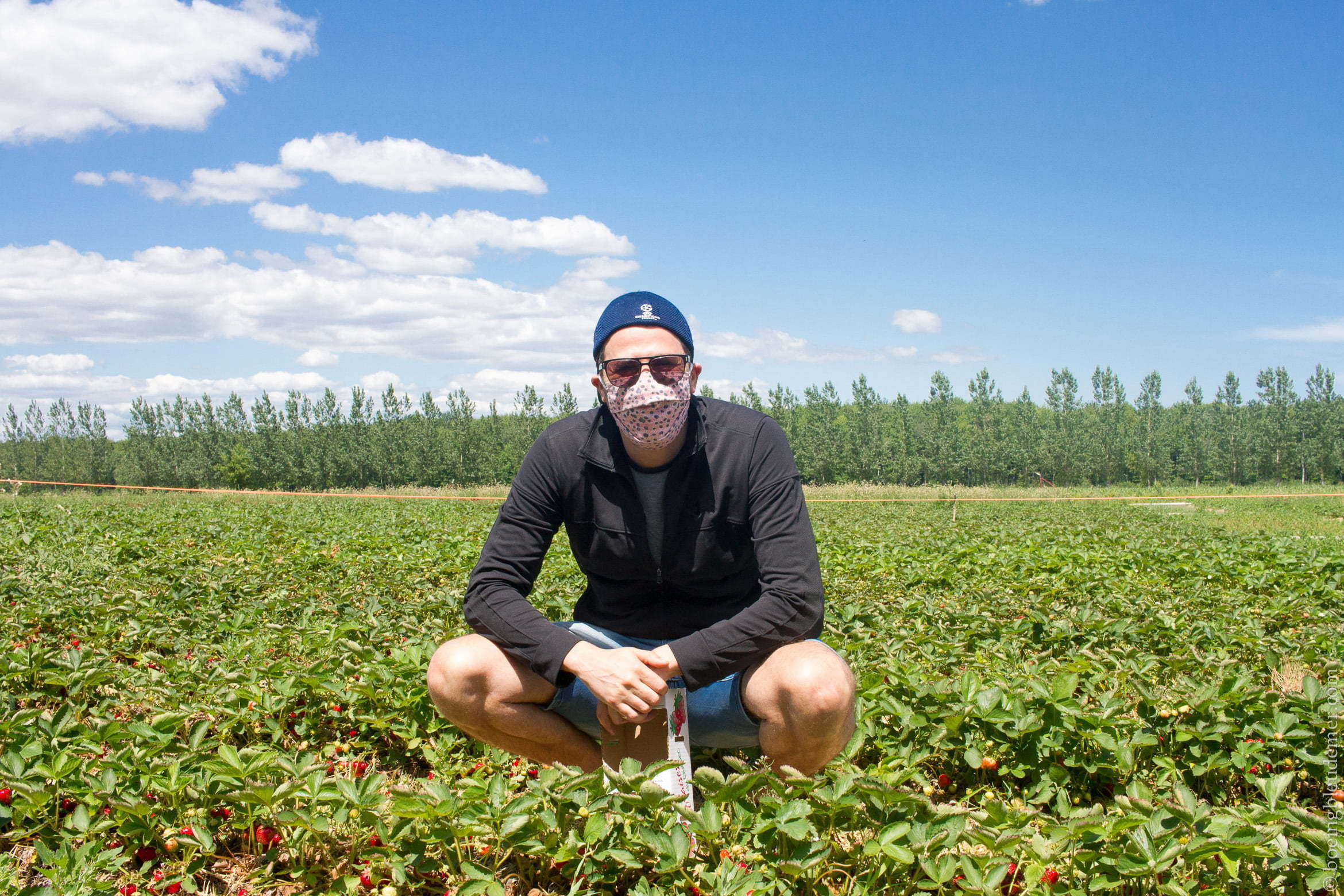 Strawberry Picking in Lavaltrie: COVID-19 protection