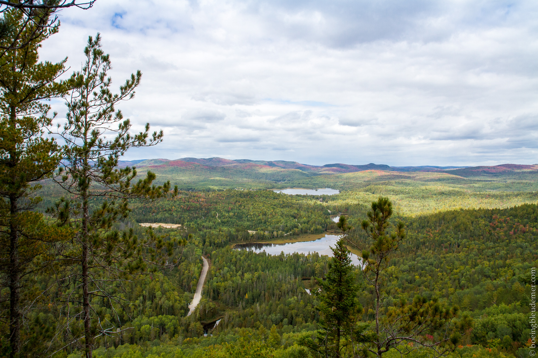 Vue sur les forêts québécoises