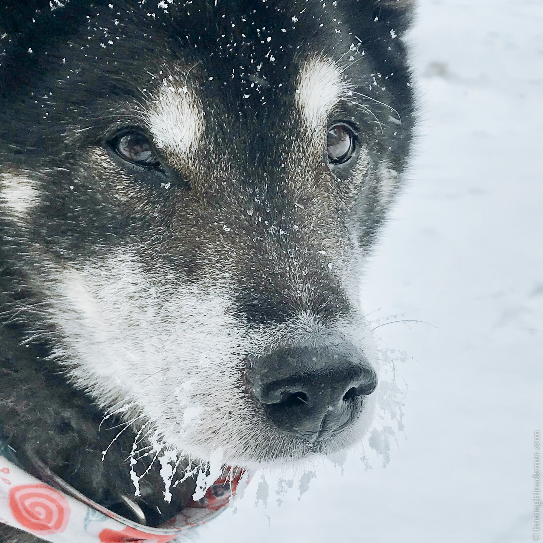 Akira les moustaches glacées